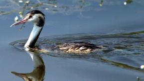 Kızılırmak Deltası 'Kuş Cenneti' Kuşlarla Şenlendi
