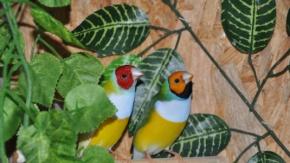 Kuş Sevgisi Ek Gelir Kapısı Oldu