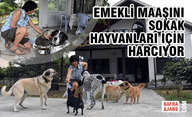 Emekli Maaşını Sokak Hayvanları İçin Harcıyor