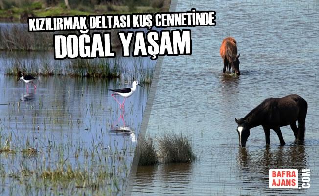 Kızılırmak Deltası Kuş Cennetinde Doğal Yaşam