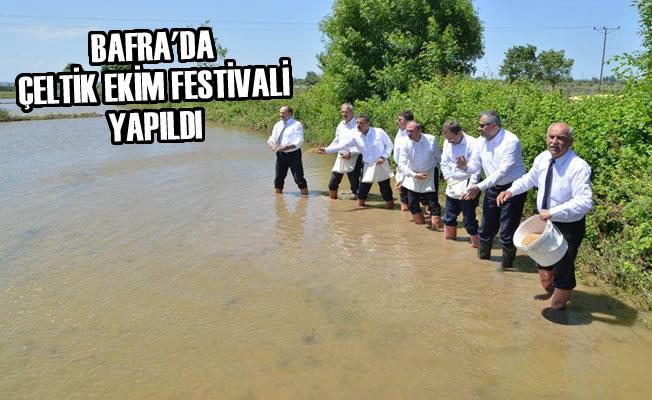 Bafra'da Çeltik Ekim Festivali Yapıldı