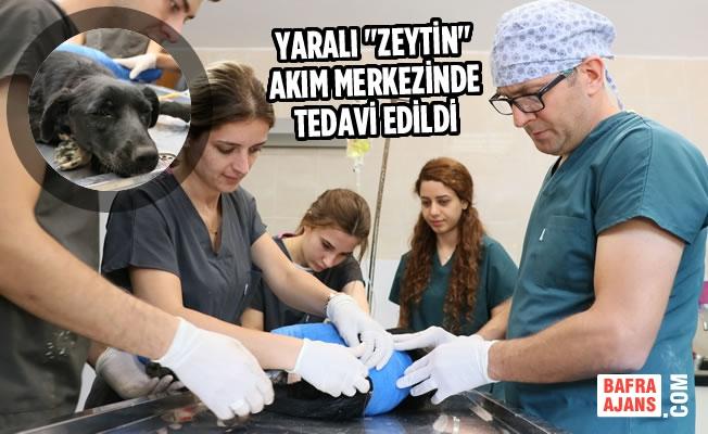 """Yaralı """"Zeytin"""" Bakım Merkezinde Tedavi Edildi"""
