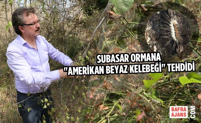 """Subasar Ormana """"Amerikan Beyaz Kelebeği"""" Tehdidi"""
