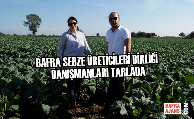 Bafra Sebze Üreticileri Birliği Danışmanları Tarlada