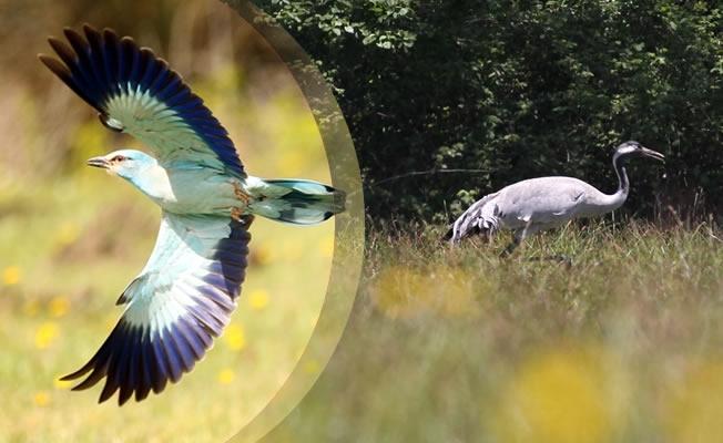 Kızılırmak Deltası'nda Kuş Popülasyonu Arttı
