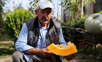 Antalya seyahatinde aldığı kabak çekirdeği geçim kapısı oldu