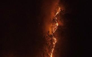 Karabük'teki orman yangını