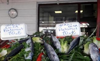 Karadenizli balıkçıların umudu