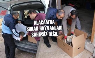 Alaçam'da Sokak Hayvanları Sahipsiz Değil