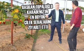 Başkan Topaloğlu Karadeniz'in En Büyük Çilek Seralarını Ziyaret Etti