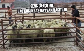 Genç Çiftçilere 370 Küçükbaş Hayvan Dağıtıldı