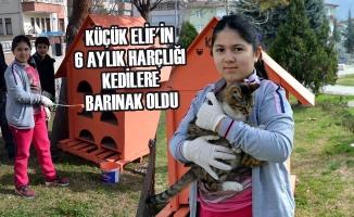 Küçük Elif'in 6 Aylık Harçlığı Kedilere Barınak Oldu