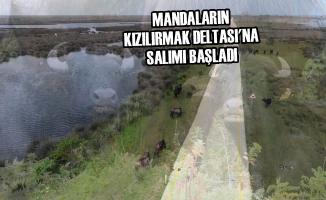 Mandaların Kızılırmak Deltası'na Salımı Başladı
