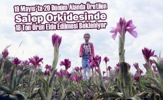 """""""Salep Orkidesinde Türkiye Marka Olacak"""""""