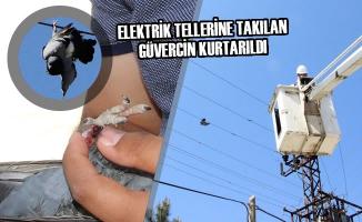 Elektrik Tellerine Takılan Güvercin Kurtarıldı