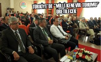 """Türkiye'de """"Milli Kenevir Tohumu"""" Üretilecek"""
