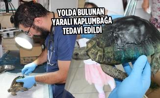 Yolda Bulunan Yaralı Kaplumbağa Tedavi Edildi