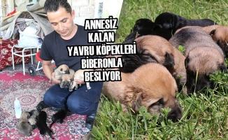Annesiz Kalan Yavru Köpekleri Biberonla Besliyor