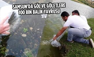 Samsun'da Göl ve Göletlere 100 Bin Balık Yavrusu