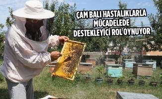 Çam Balı Hastalıklarla Mücadelede Destekleyici Rol Oynuyor