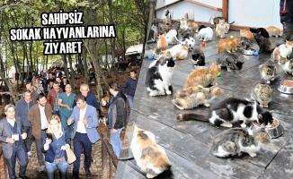 Sahipsiz Sokak Hayvanlarına Ziyaret