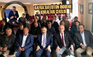 Bafra'da Tütün İndirme Kuraları Çekildi