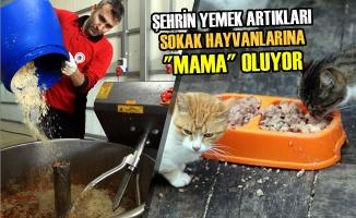 """Şehrin Yemek Artıkları Sokak Hayvanlarına """"Mama"""" Oluyor"""