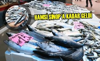 Karadeniz'deki Bolluk Balıkçıları Memnun Etti