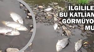 Elifli Mahallesindeki Toplu Balık Ölümlerinin Nedeni?