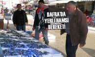Bafra'da Yerli Hamsi Bereketi