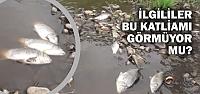 Elifli Mahallesindeki Toplu Balık Ölümlerinin...