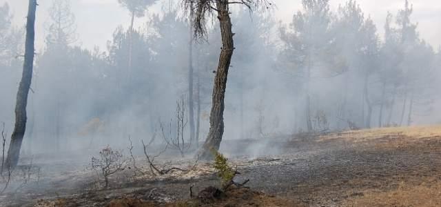 Yıldırım Düştü, Orman Yangını Çıktı