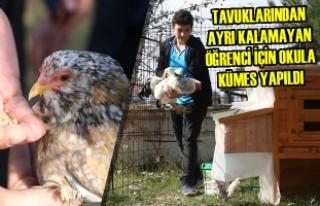 Tavuklarından Ayrı Kalamayan Öğrenci İçin Okula...
