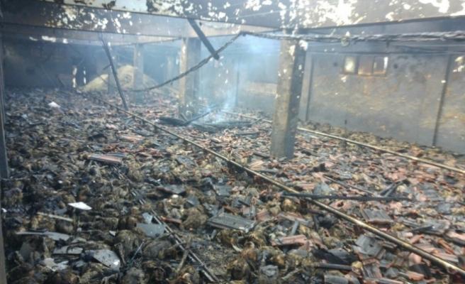 Düzce'de kümes yangını