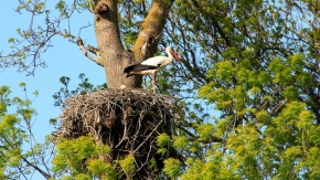 Kızılırmak Deltası Kuş Cenneti Ziyaretçilerine Doğal Yaşam Vaadediyor