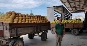 Bafra'da Yerli Karpuz ve Kavun Piyasada Yerini Aldı