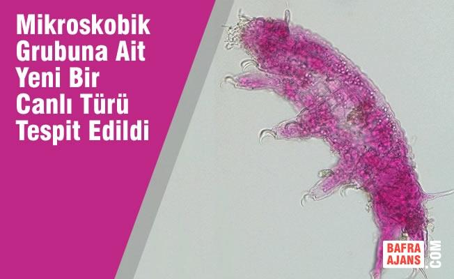 Türkiye'de yeni bir canlı türü tespit edildi