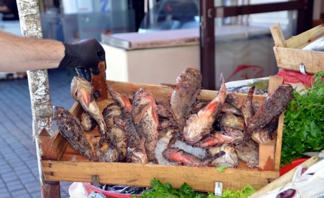 İskorpit balık tezgahlarını süsledi