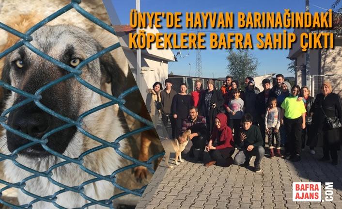 Ünye'de Hayvan Barınağındaki Köpeklere Bafra Sahip Çıktı