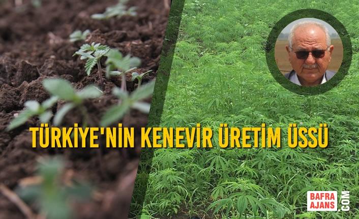 Türkiye'de Ekilen Kenevirin Yüzde Kırkı Bu Arazide