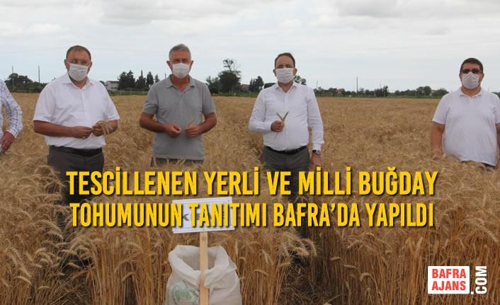 Tescillenen Yerli ve Milli Buğday Tohumunun Tanıtımı Bafra'da Yapıldı