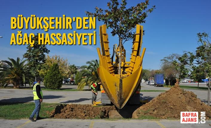 Büyükşehir'den Ağaç Hassasiyeti
