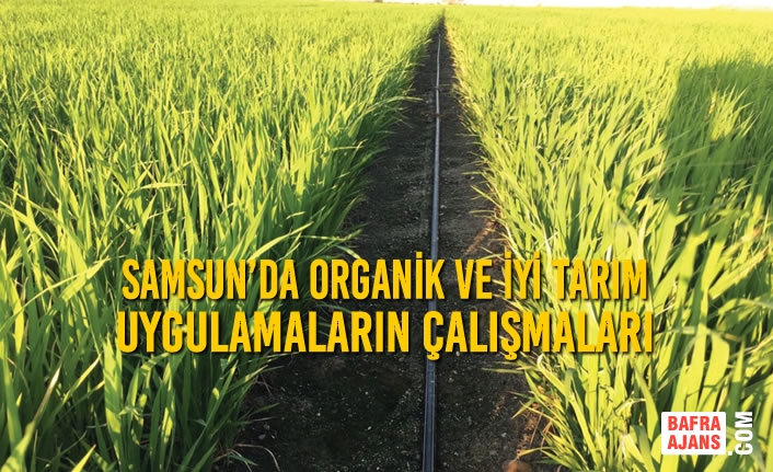 Samsun'da Organik ve İyi Tarım Uygulamalarının Yaygınlaştırılması Çalışmaları