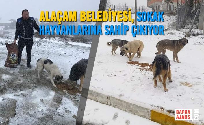 Alaçam Belediyesi, Sokak Hayvanlarına Sahip Çıkıyor