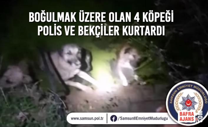 Boğulmak Üzere Olan 4 Köpeği Polis Ve Bekçiler Kurtardı