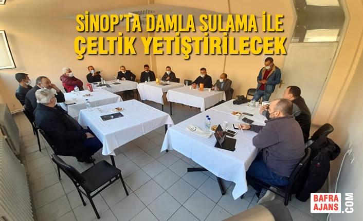 Sinop'ta Damla Sulama İle Çeltik Yetiştirilecek