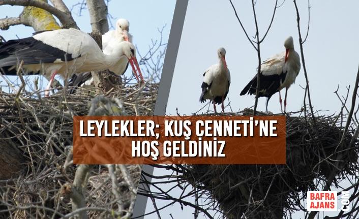 Leylekler; Kuş Cenneti'ne Hoş Geldiniz