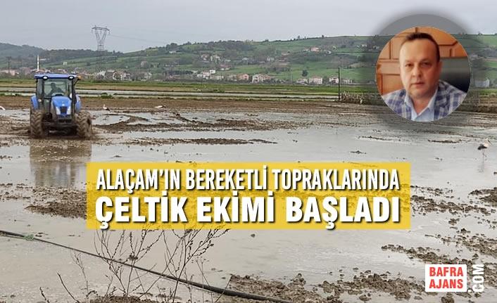 Alaçam'ın Bereketli Topraklarında Çeltik Ekimi Başladı