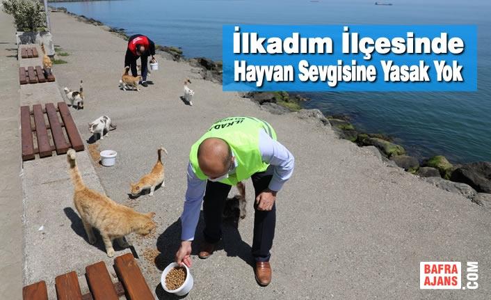 İlkadım Belediyesi Bayramda'da Sokak Hayvanlarını Unutmadı