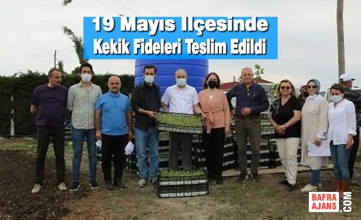 19 Mayıs İlçesinde Kekik Fideleri Teslim Edildi